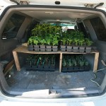 Subaru Forester loaded with certified organic plants bound for Bohemian Bounty client's gardens