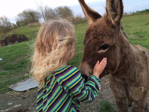 Miniature donkey getting some love